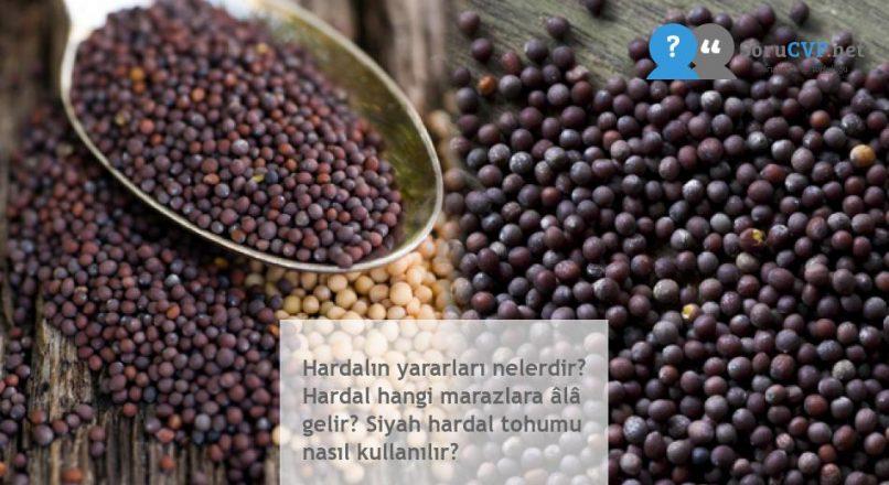 Hardalın yararları nelerdir? Hardal hangi marazlara âlâ gelir? Siyah hardal tohumu nasıl kullanılır?