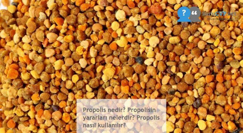 Propolis nedir? Propolisin yararları nelerdir? Propolis nasıl kullanılır?
