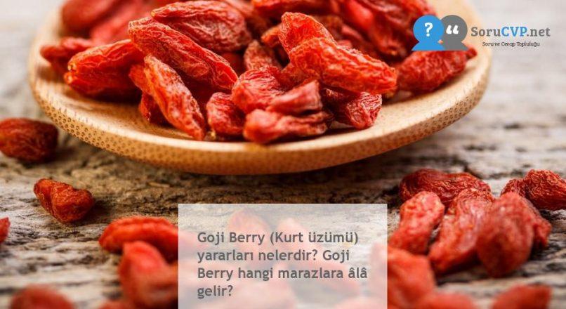 Goji Berry (Kurt üzümü) yararları nelerdir? Goji Berry hangi marazlara âlâ gelir?
