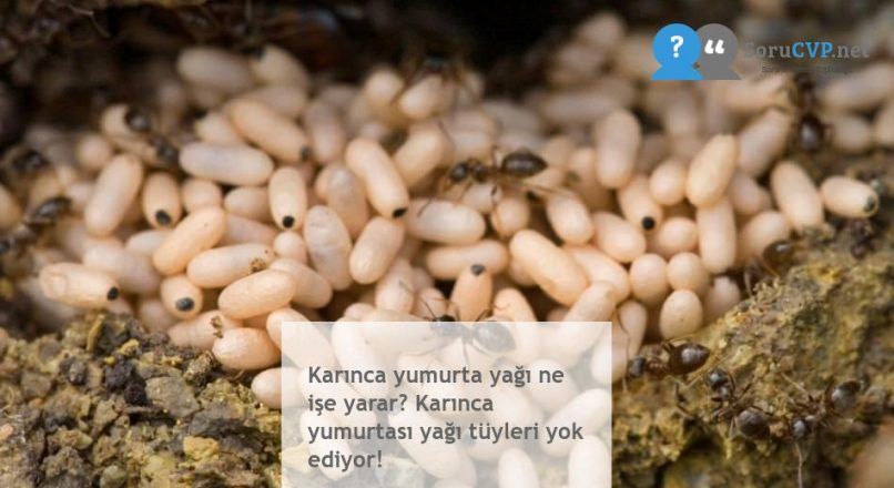 Karınca yumurta yağı ne işe yarar? Karınca yumurtası yağı tüyleri yok ediyor!