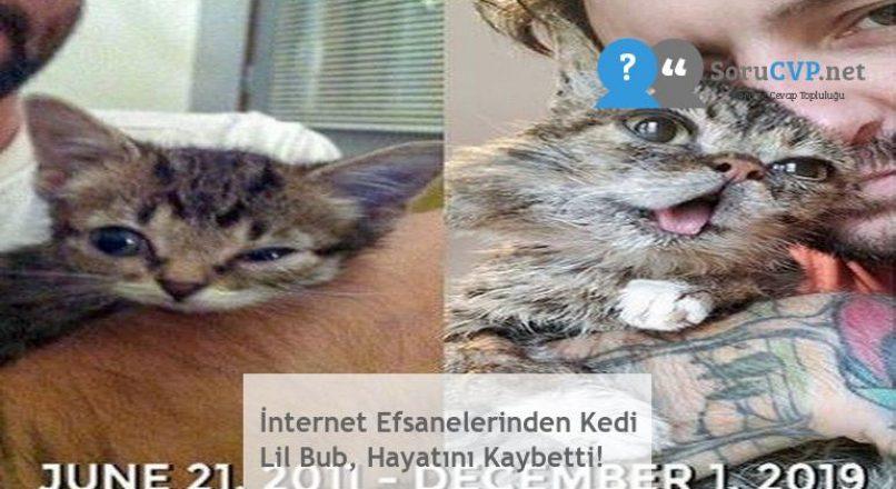 İnternet Efsanelerinden Kedi Lil Bub, Hayatını Kaybetti!