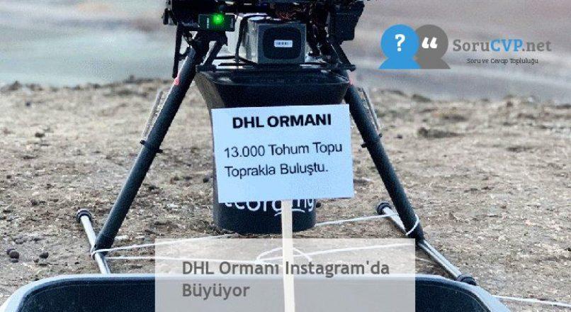 DHL Ormanı Instagram'da Büyüyor