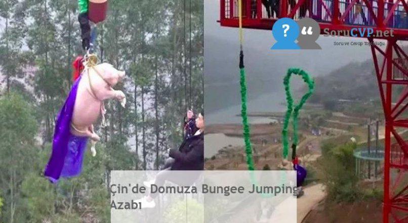 Çin'de Domuza Bungee Jumping Azabı