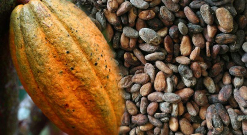Kakaonun yararları nelerdir? Kakao hangi marazlara âlâ gelir?