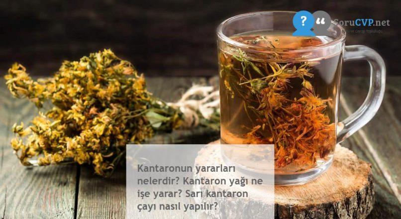 Kantaronun yararları nelerdir? Kantaron yağı ne işe yarar? Sarı kantaron çayı nasıl yapılır?
