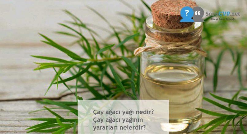 Çay ağacı yağı nedir? Çay ağacı yağının yararları nelerdir?