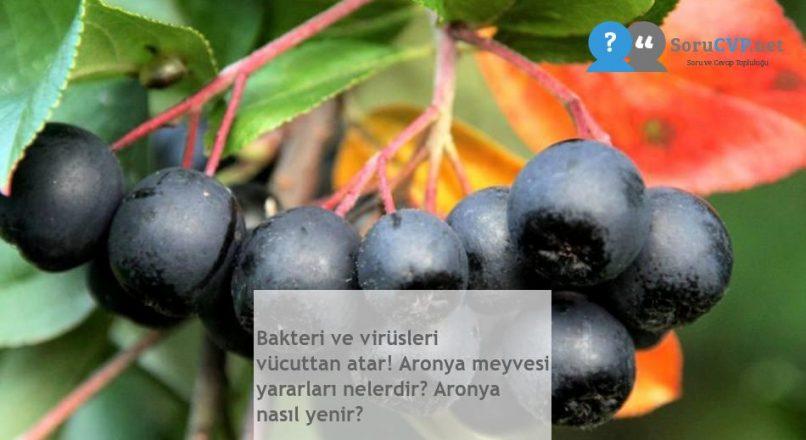 Bakteri ve virüsleri vücuttan atar! Aronya meyvesi yararları nelerdir? Aronya nasıl yenir?