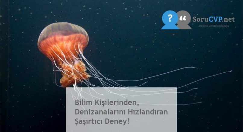 Bilim Kişilerinden, Denizanalarını Hızlandıran Şaşırtıcı Deney!