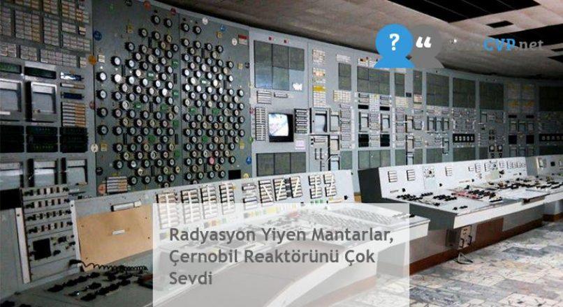 Radyasyon Yiyen Mantarlar, Çernobil Reaktörünü Çok Sevdi