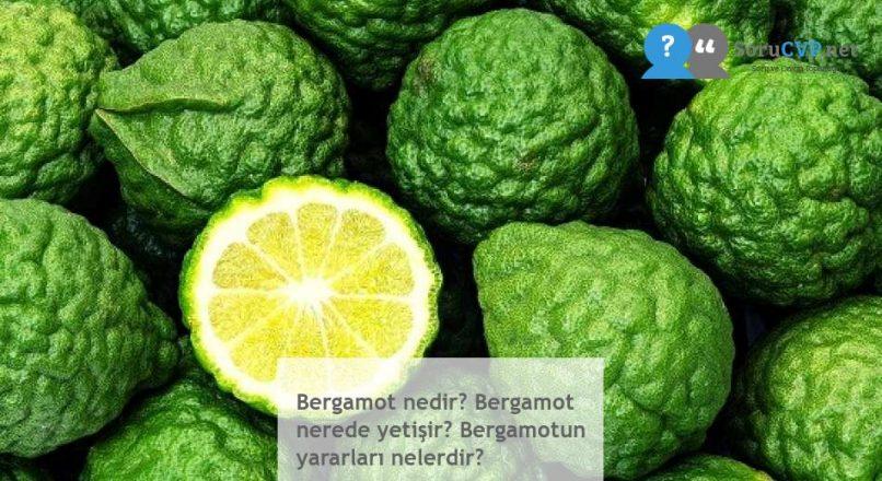 Bergamot nedir? Bergamot nerede yetişir? Bergamotun yararları nelerdir?
