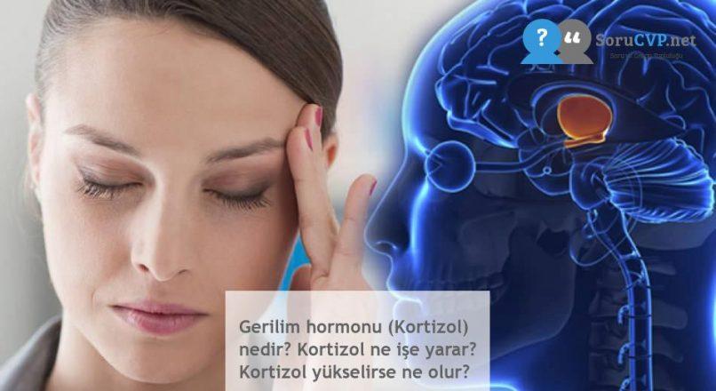 Gerilim hormonu (Kortizol) nedir? Kortizol ne işe yarar? Kortizol yükselirse ne olur?