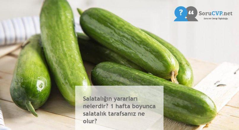Salatalığın yararları nelerdir? 1 hafta boyunca salatalık tarafsanız ne olur?