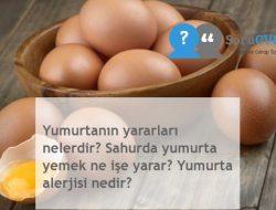 Yumurtanın yararları nelerdir? Sahurda yumurta yemek ne işe yarar? Yumurta alerjisi nedir?