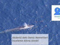 Akdeniz'deki Deniz Memelileri İnceleme Altına Alındı!