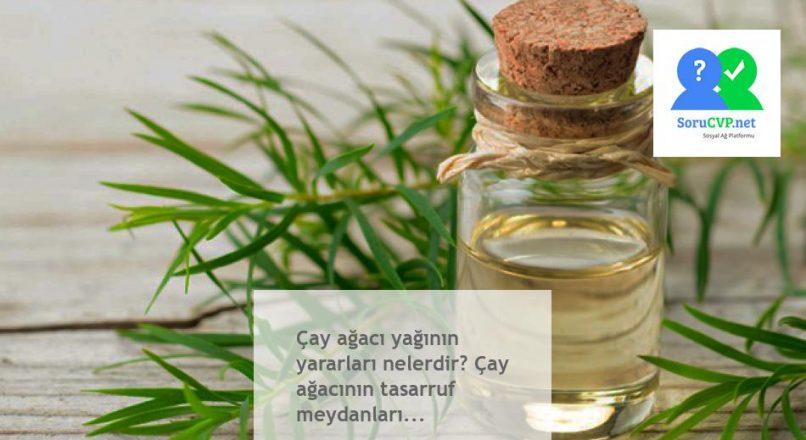 Çay ağacı yağının yararları nelerdir? Çay ağacının tasarruf meydanları…