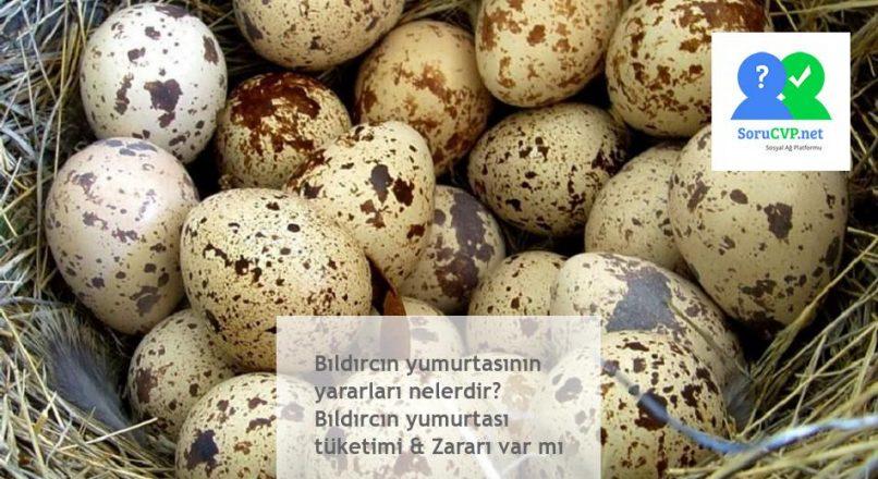 Bıldırcın yumurtasının yararları nelerdir? Bıldırcın yumurtası tüketimi & Zararı var mı