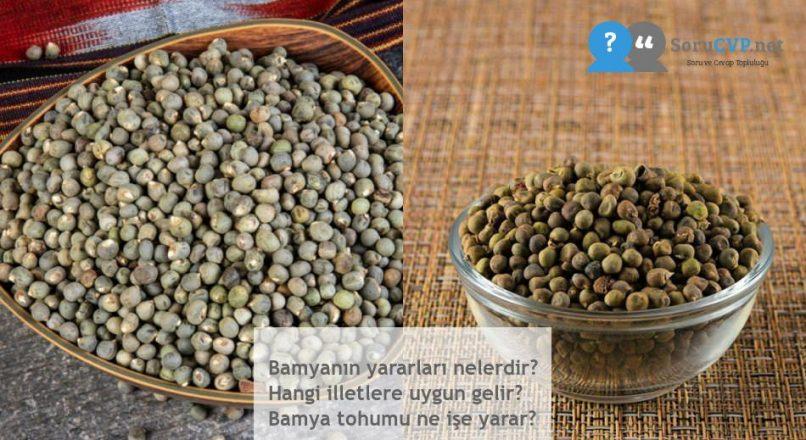 Bamyanın yararları nelerdir? Hangi illetlere uygun gelir? Bamya tohumu ne işe yarar?