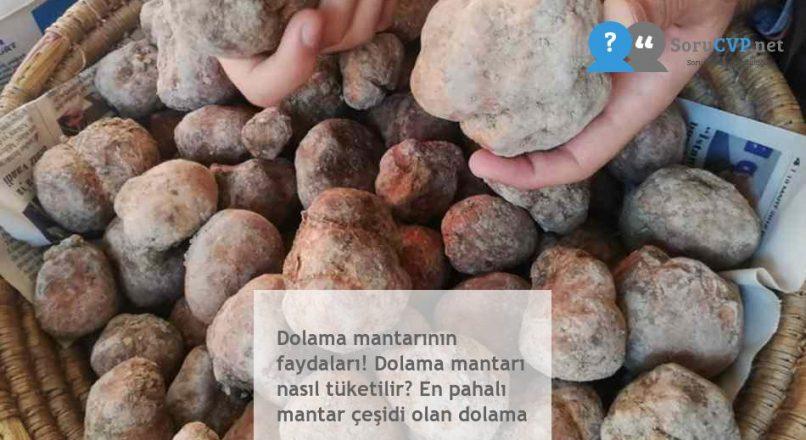 Dolama mantarının faydaları! Dolama mantarı nasıl tüketilir? En pahalı mantar çeşidi olan dolama