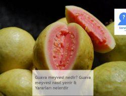 Guava meyvesi nedir? Guava meyvesi nasıl yenir & Yararları nelerdir