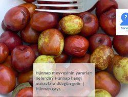Hünnap meyvesinin yararları nelerdir? Hünnap hangi marazlara düzgün gelir | Hünnap çayı…