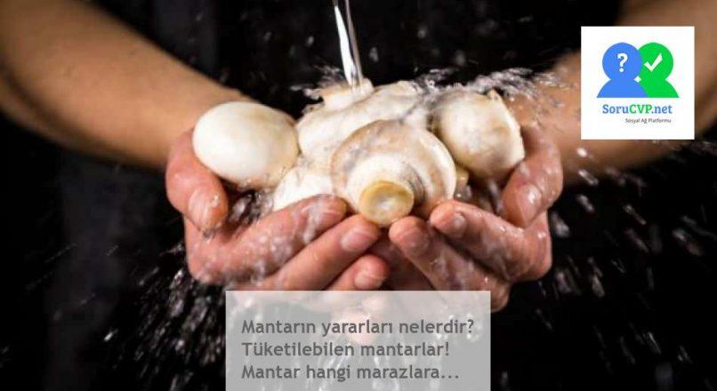 Mantarın yararları nelerdir? Tüketilebilen mantarlar! Mantar hangi marazlara…