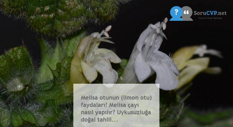 Melisa otunun (limon otu) faydaları! Melisa çayı nasıl yapılır? Uykusuzluğa doğal tahlil…