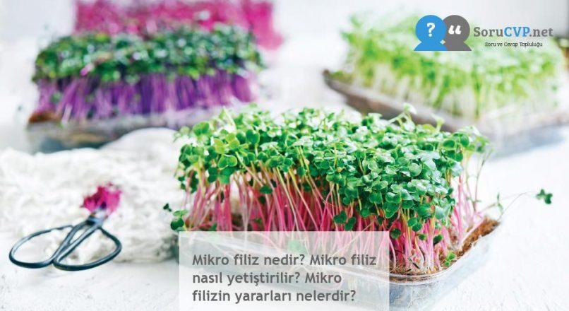 Mikro filiz nedir? Mikro filiz nasıl yetiştirilir? Mikro filizin yararları nelerdir?