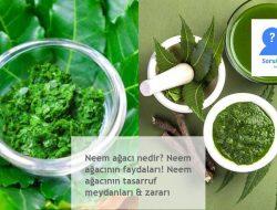 Neem ağacı nedir? Neem ağacının faydaları! Neem ağacının tasarruf meydanları & zararı