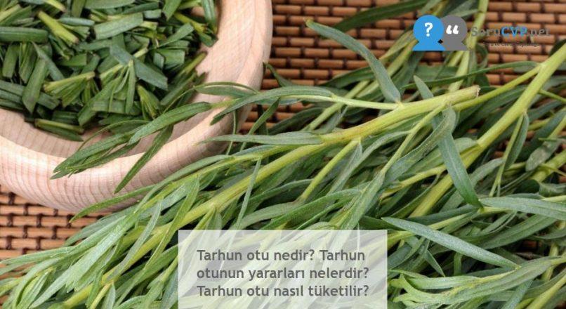 Tarhun otu nedir? Tarhun otunun yararları nelerdir? Tarhun otu nasıl tüketilir?