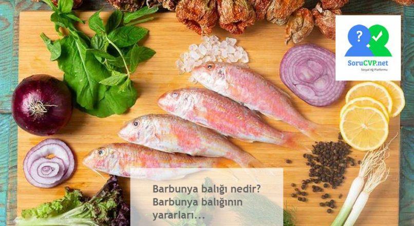 Barbunya balığı özellikleri? Barbunya balığının yararları ve faydaları